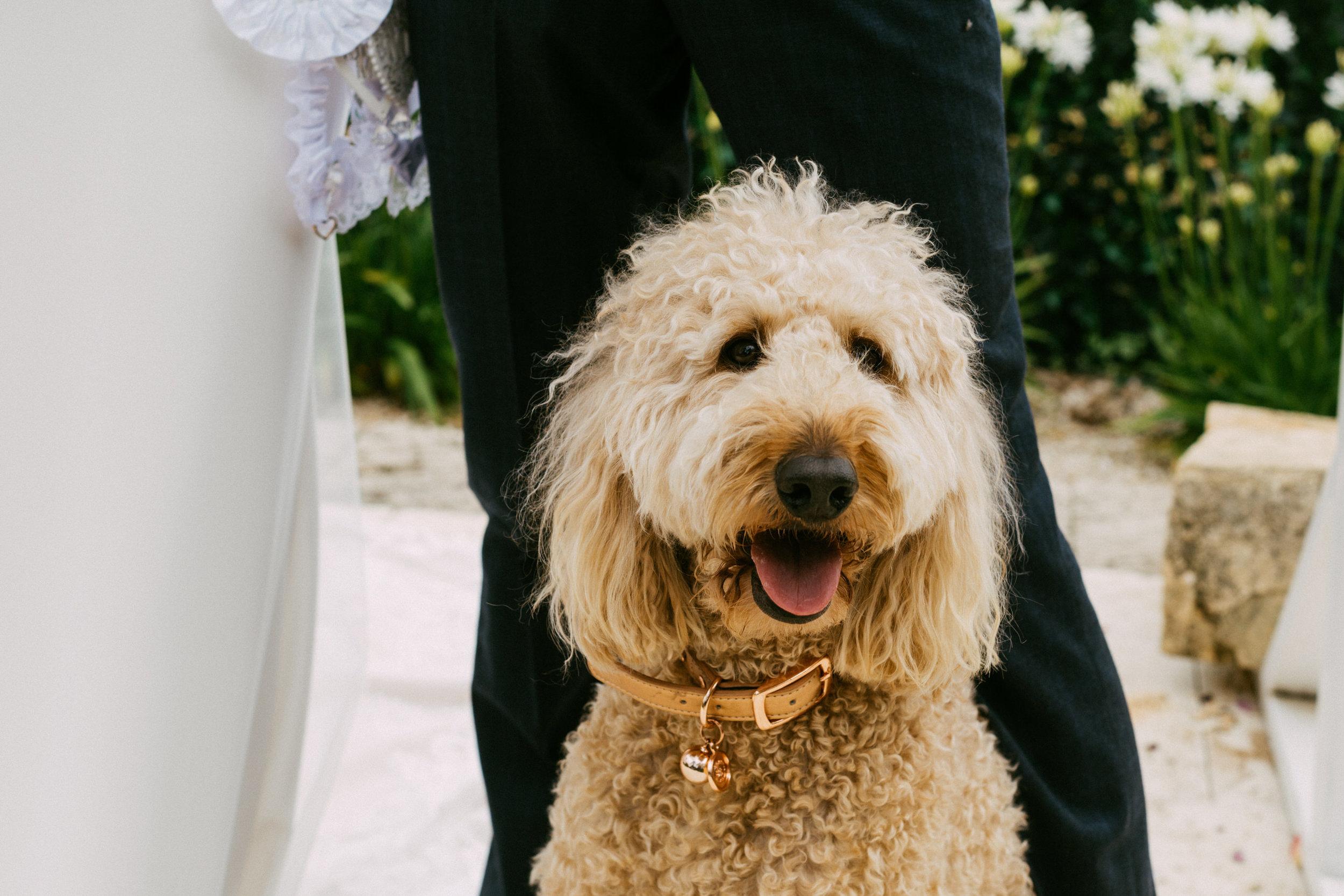Maximillian Wedding Adelaide Hills 066.jpg