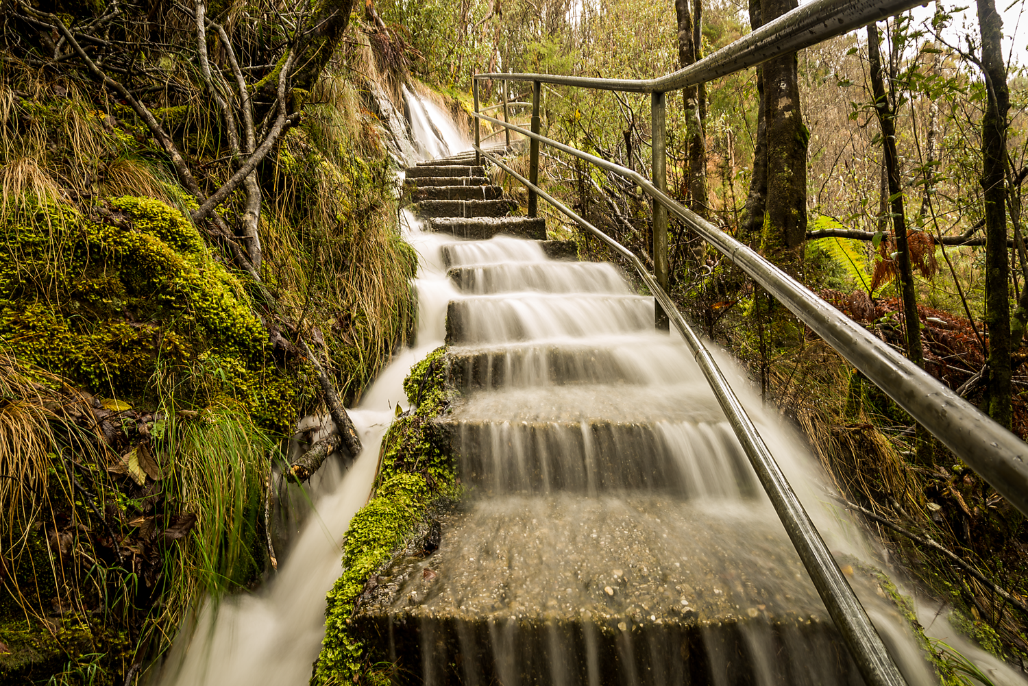 Falling Down The Stairs - Tasmania - Wilkography