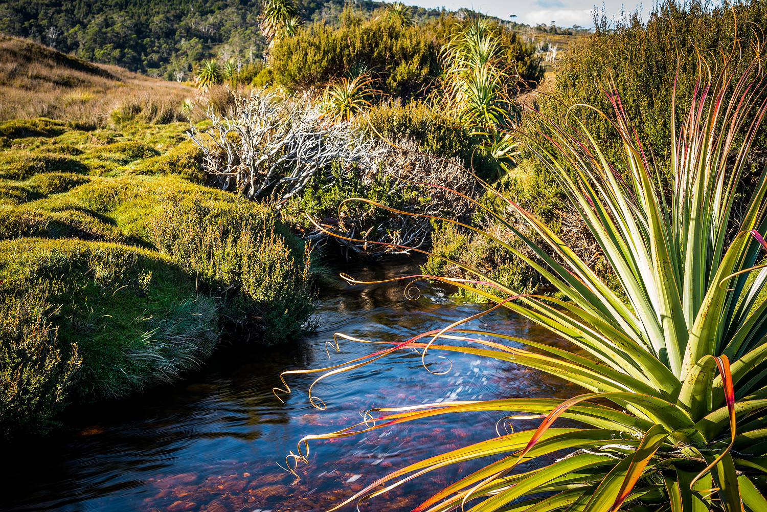 Flora Of Cradle Mountain - Tasmania - Wilkography