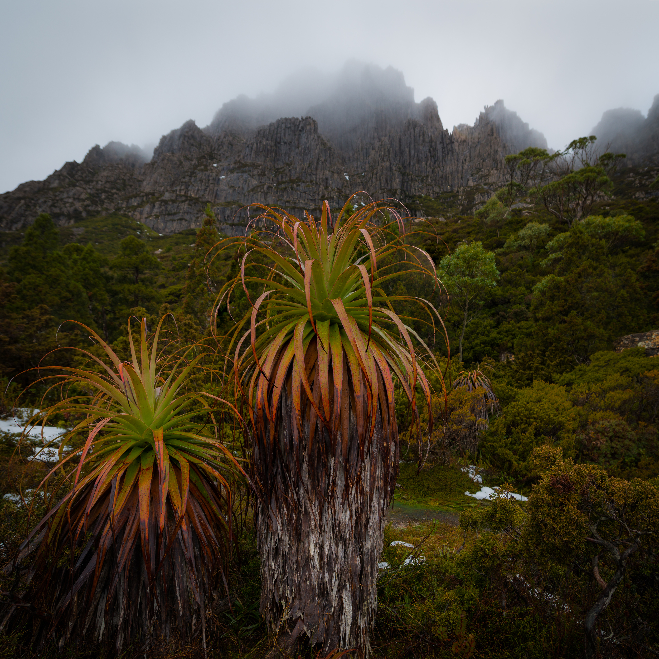 Cradle Mountain Scenery - Tasmania - Wilkography.jpg