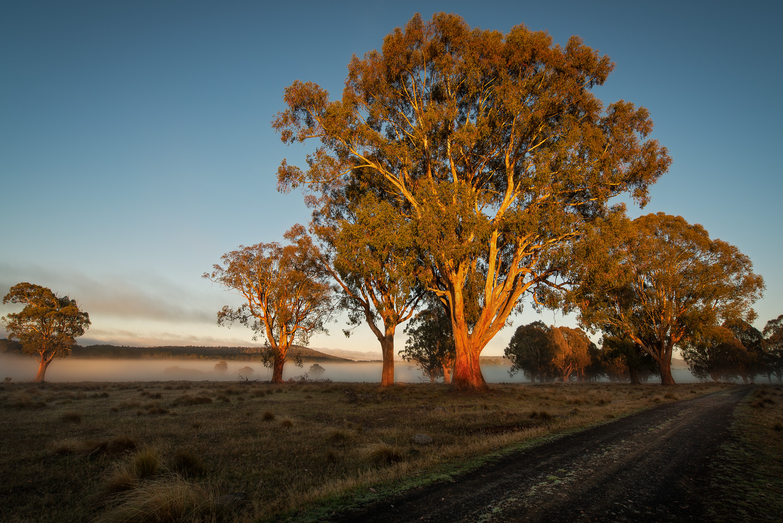 Tasmanian Photography - Bronte Park - WILKOGRAPHY.jpg