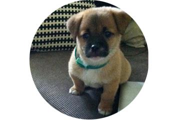 homer puppy about pillowbook.jpg