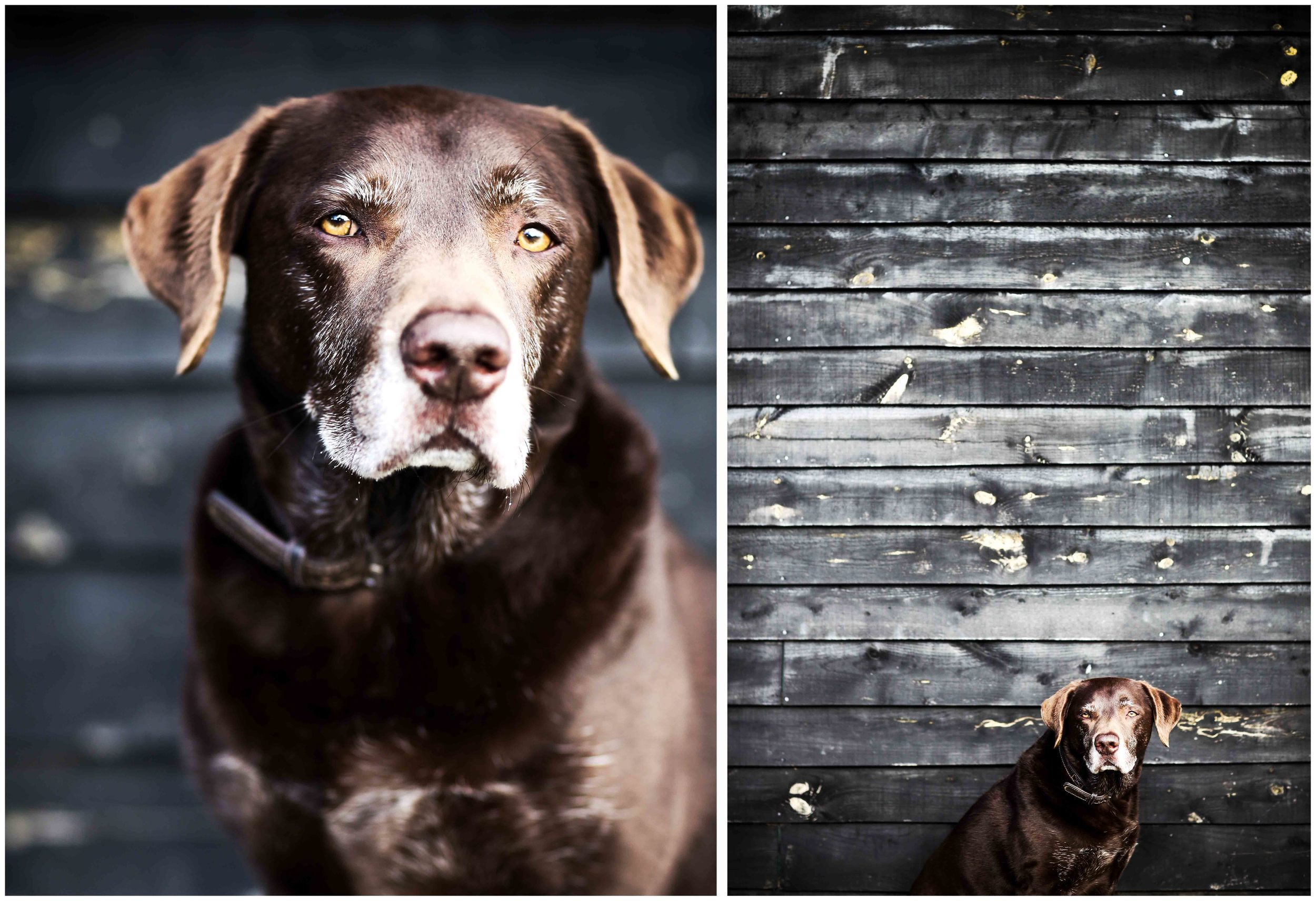 Dogs_April_2016_composite2_RS.jpg