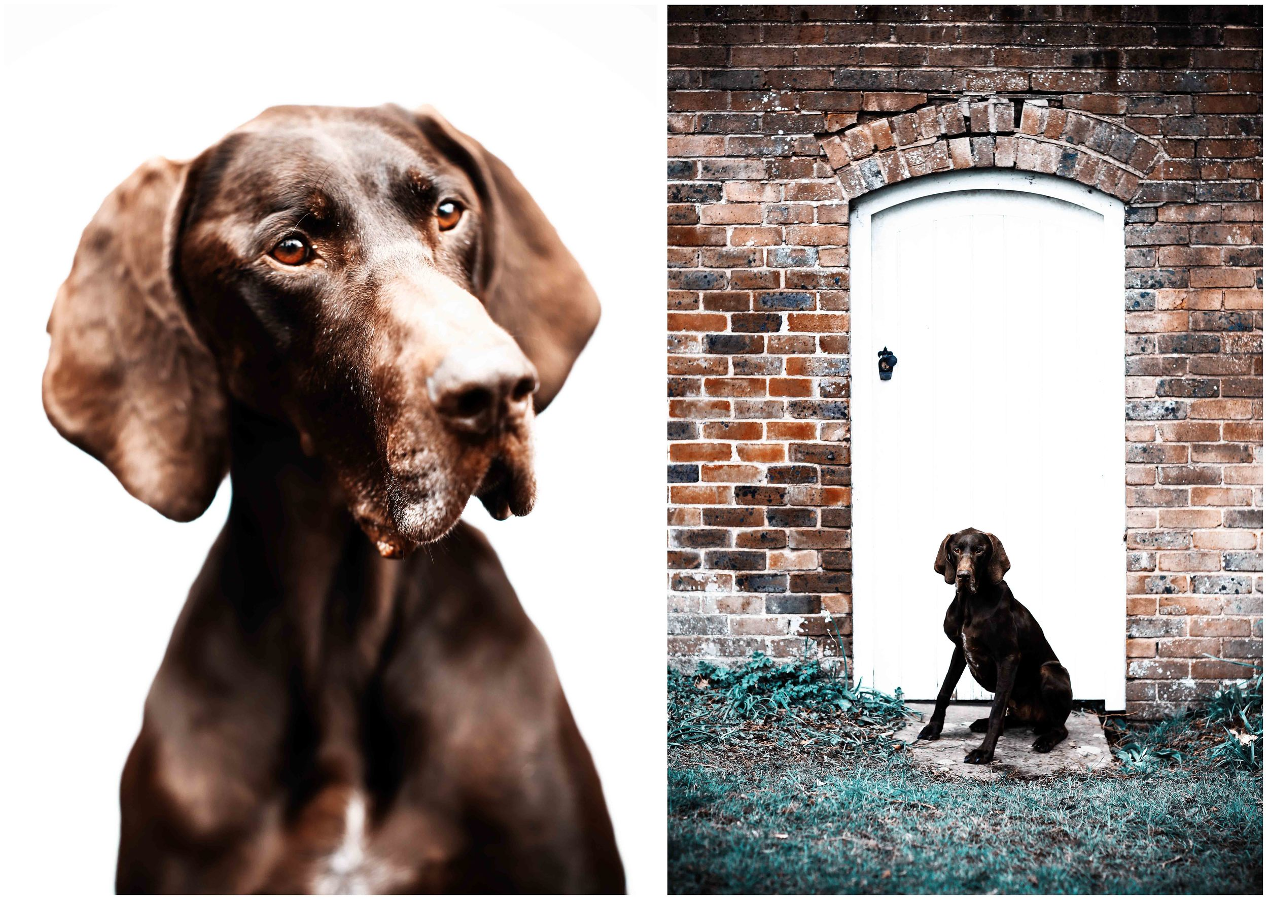 Dogs_April_2016_composite5_RS.jpg