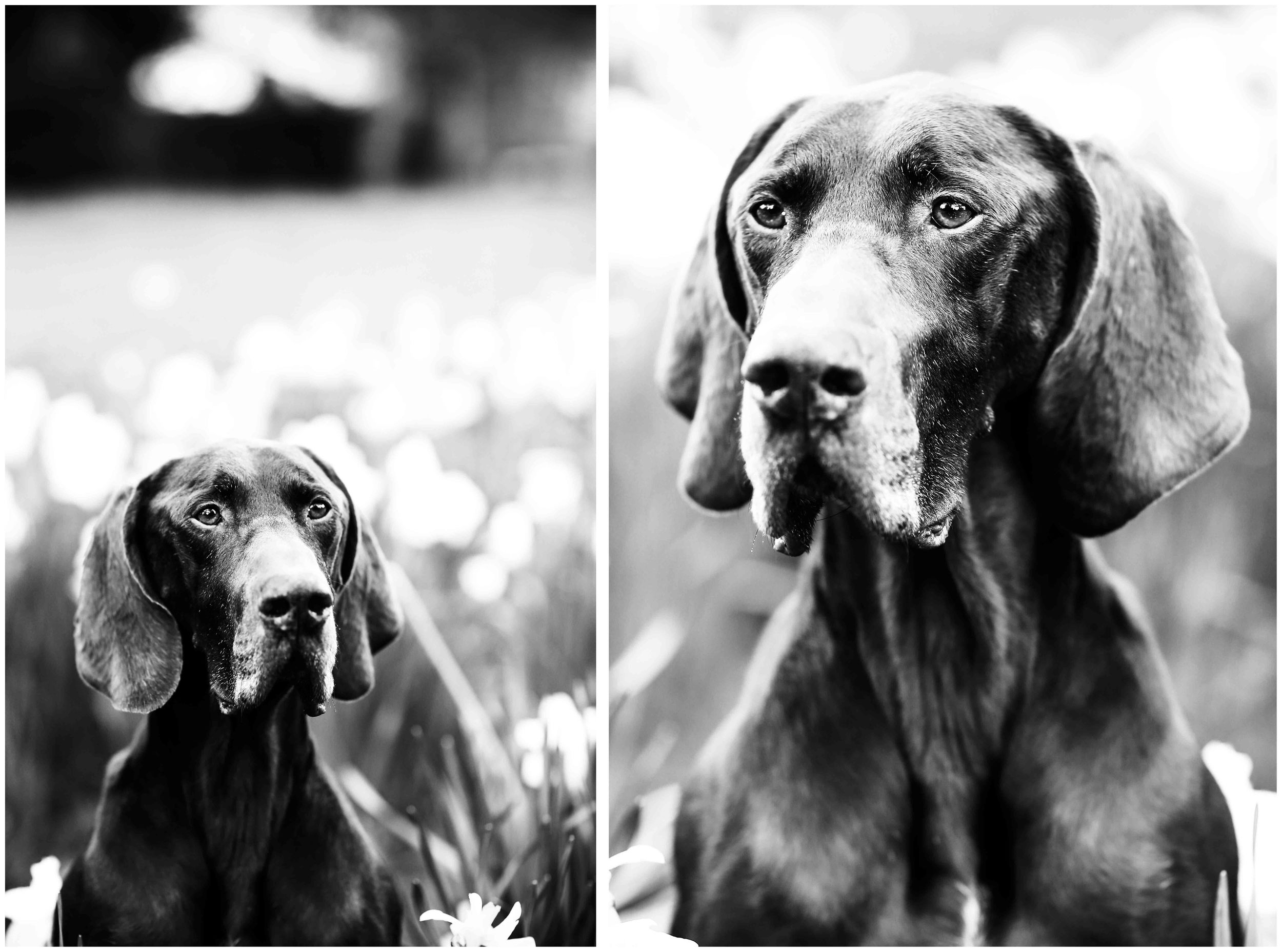 Dogs_April_2016_composite6_rs.jpg