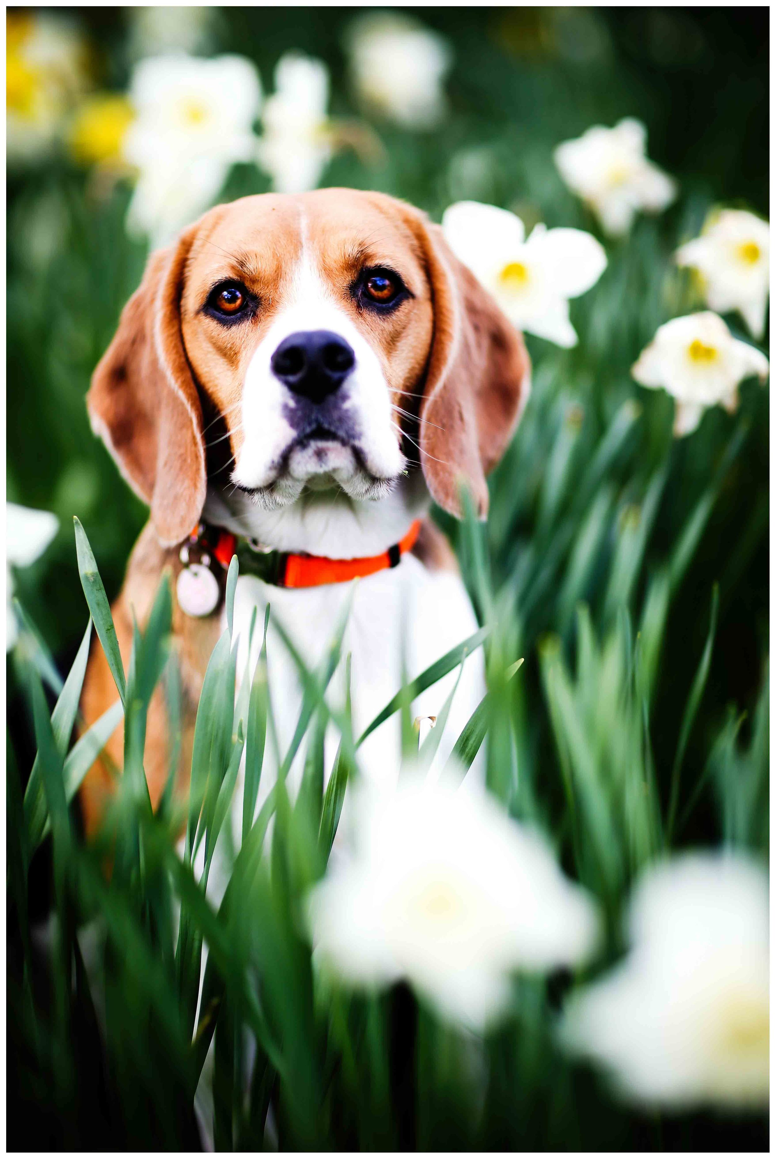 Dogs_April_2016-191ps_rs.jpg