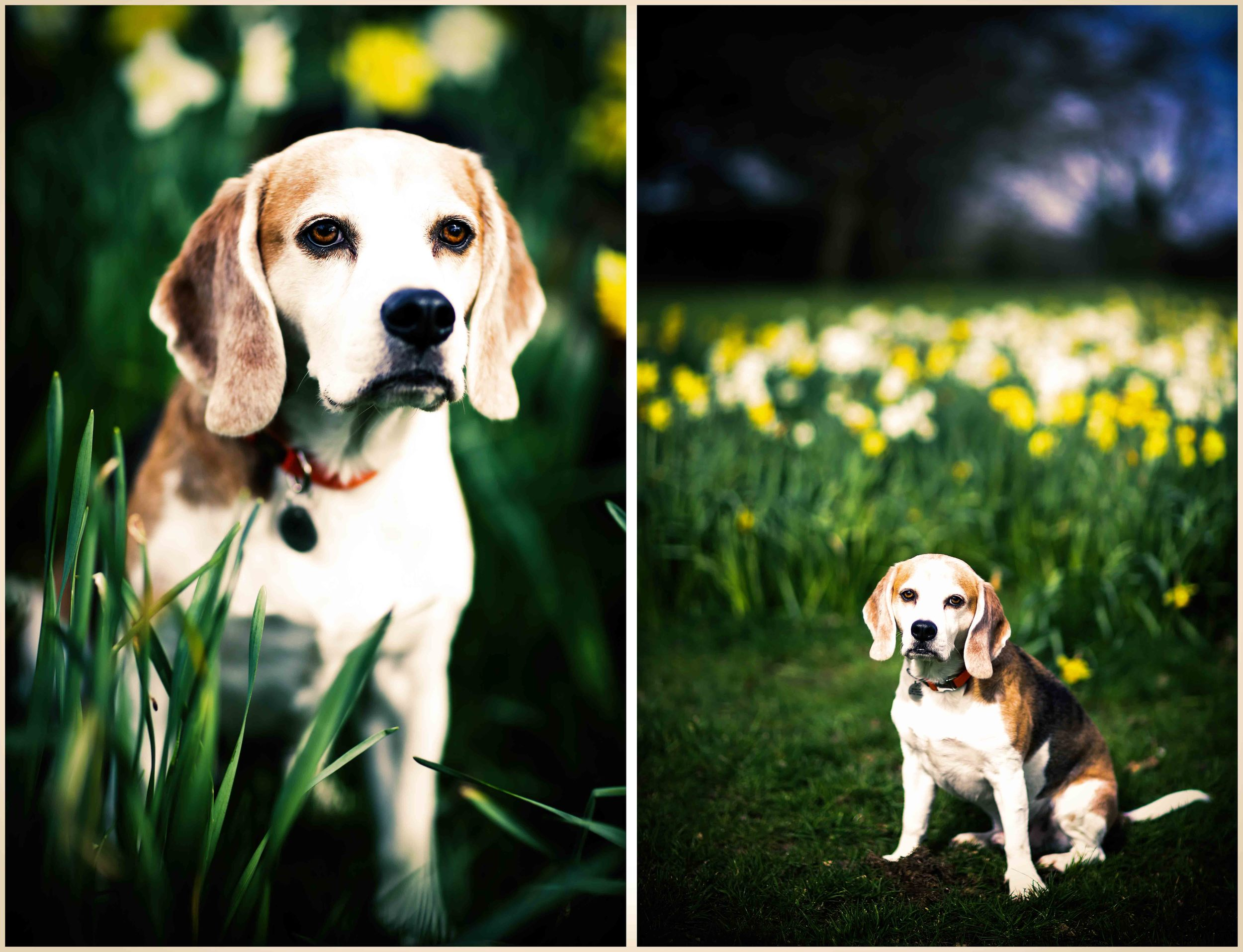 Dogs_April_2016_composite3RS.jpg