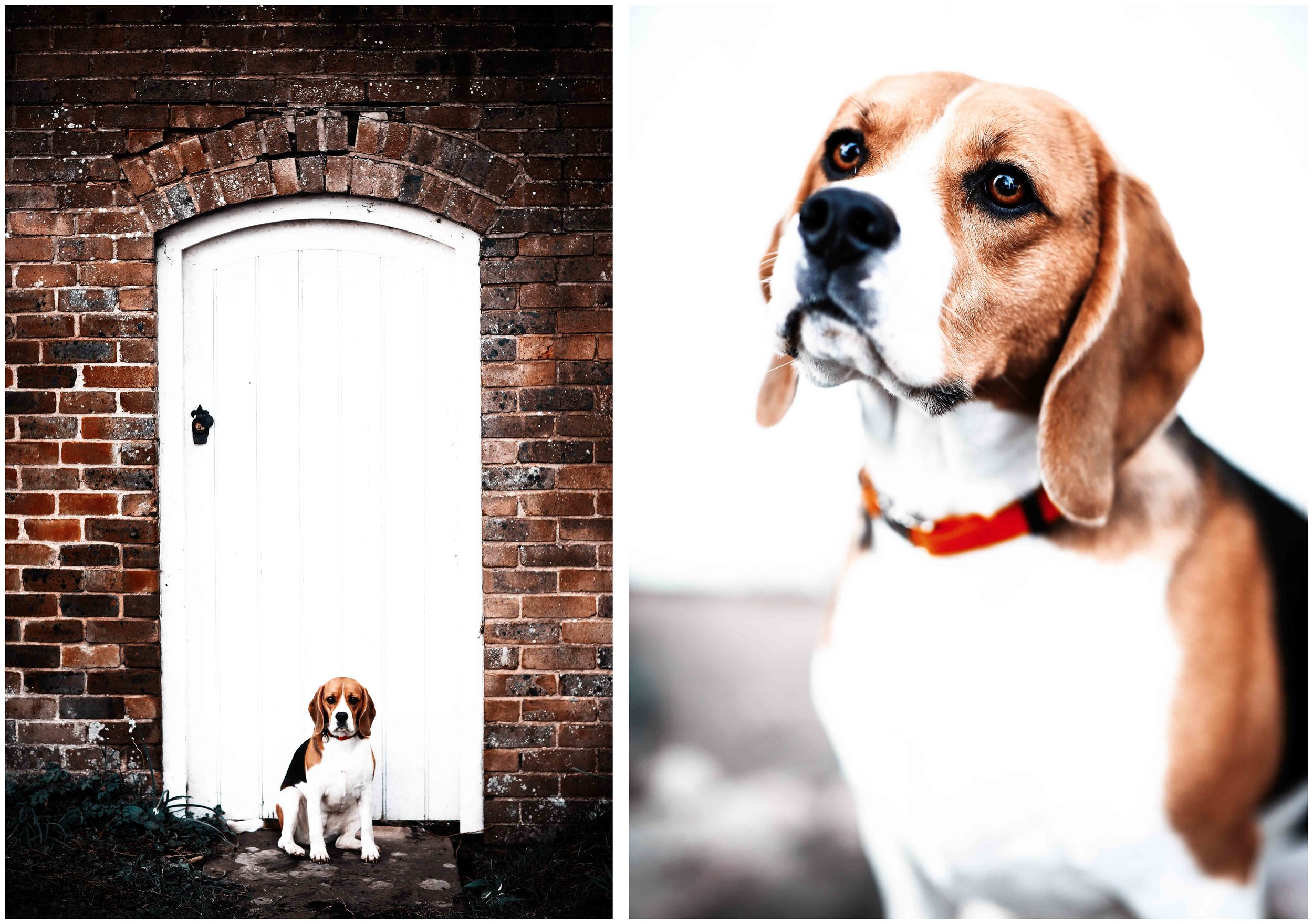 Dogs_April_2016_composite4_RS.jpg