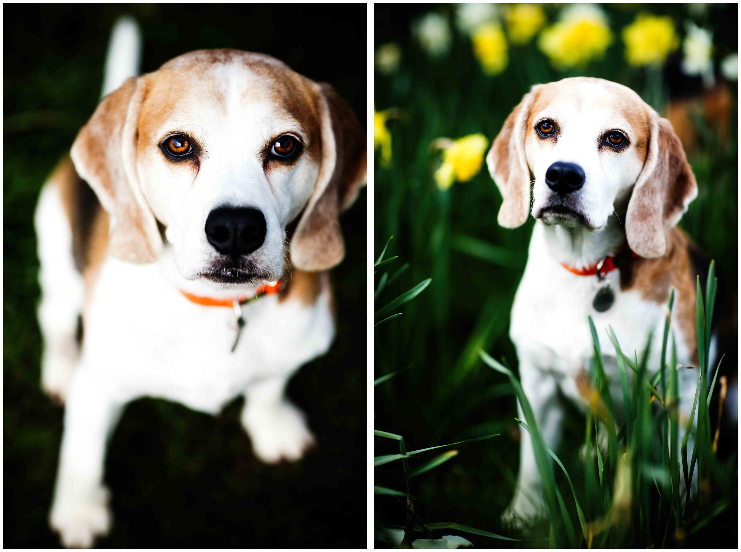 Dogs_April_2016_composite7_rs.jpg