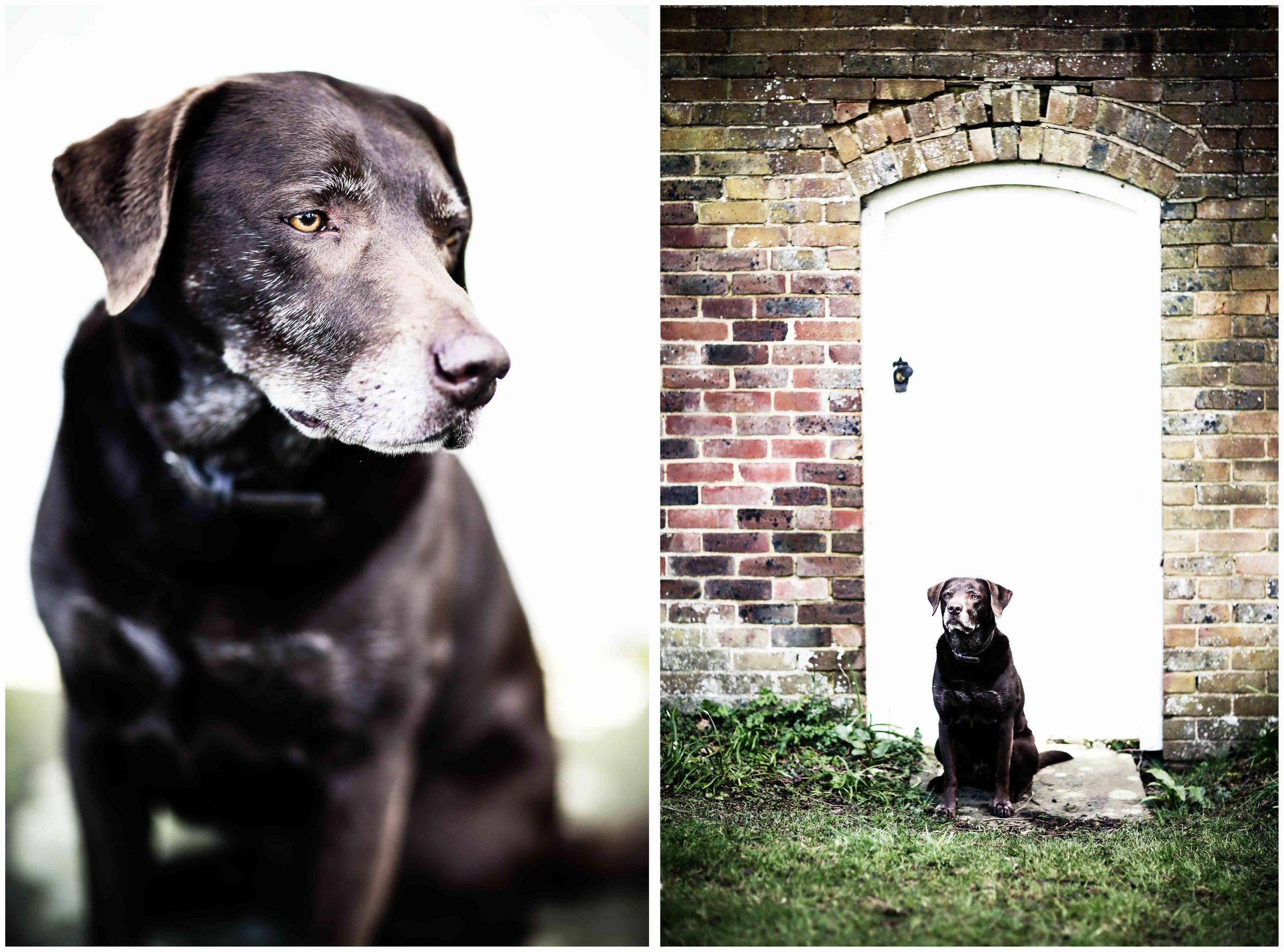Dogs_April_2016_composite9_rs.jpg