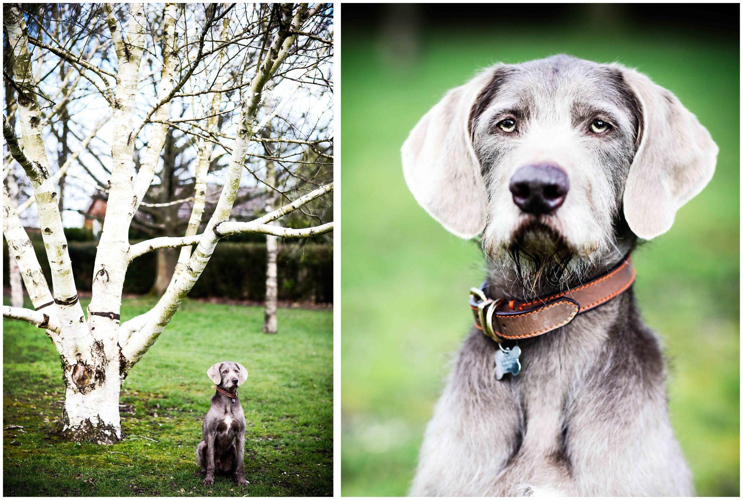 Dogs_April_2016_composite10_rs.jpg