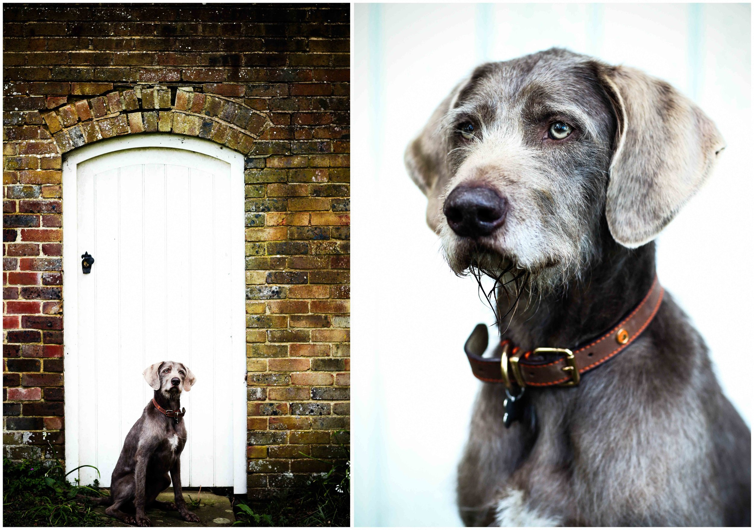 Dogs_April_2016_composite1_RS.jpg