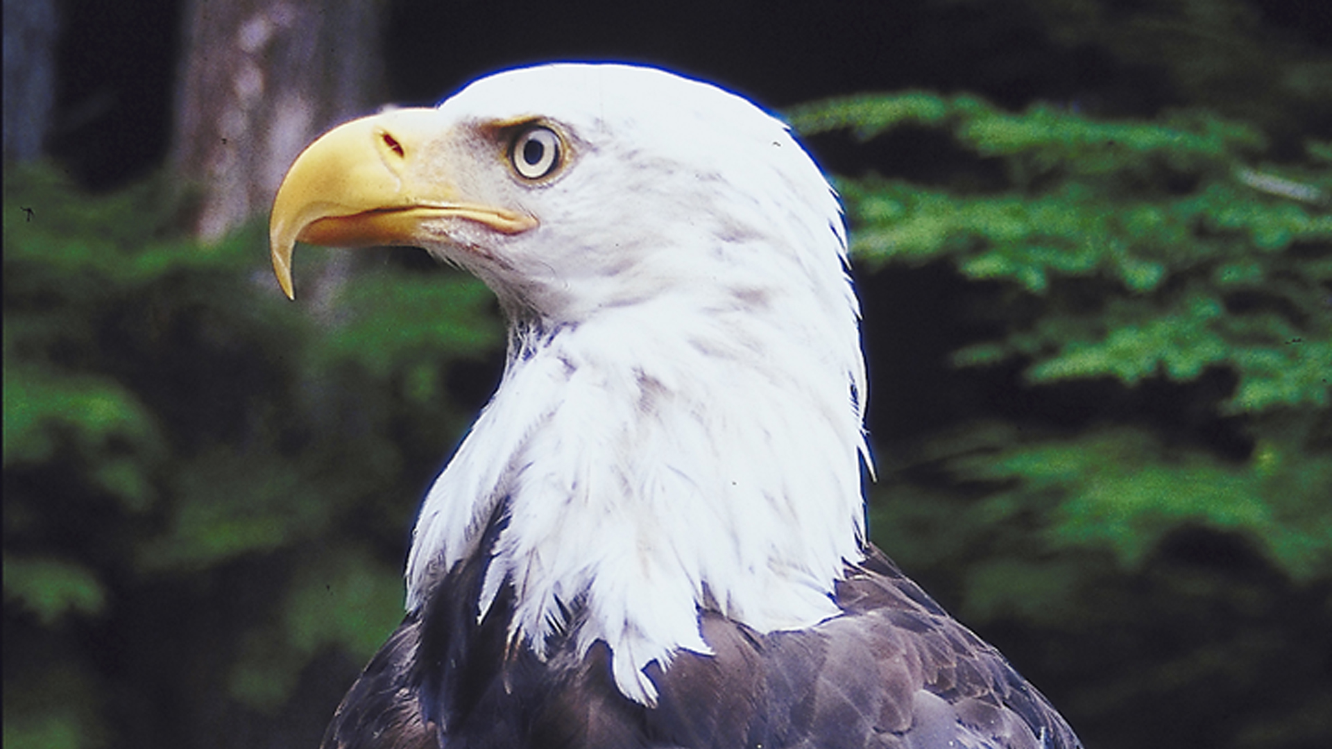 287_BIRDS EYE.jpg