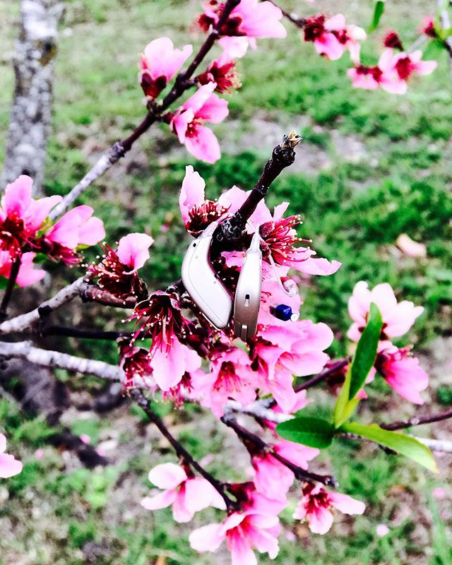 Millions of peaches #newbraunfels #hearingaids #hearingloss #nbtx #oticon