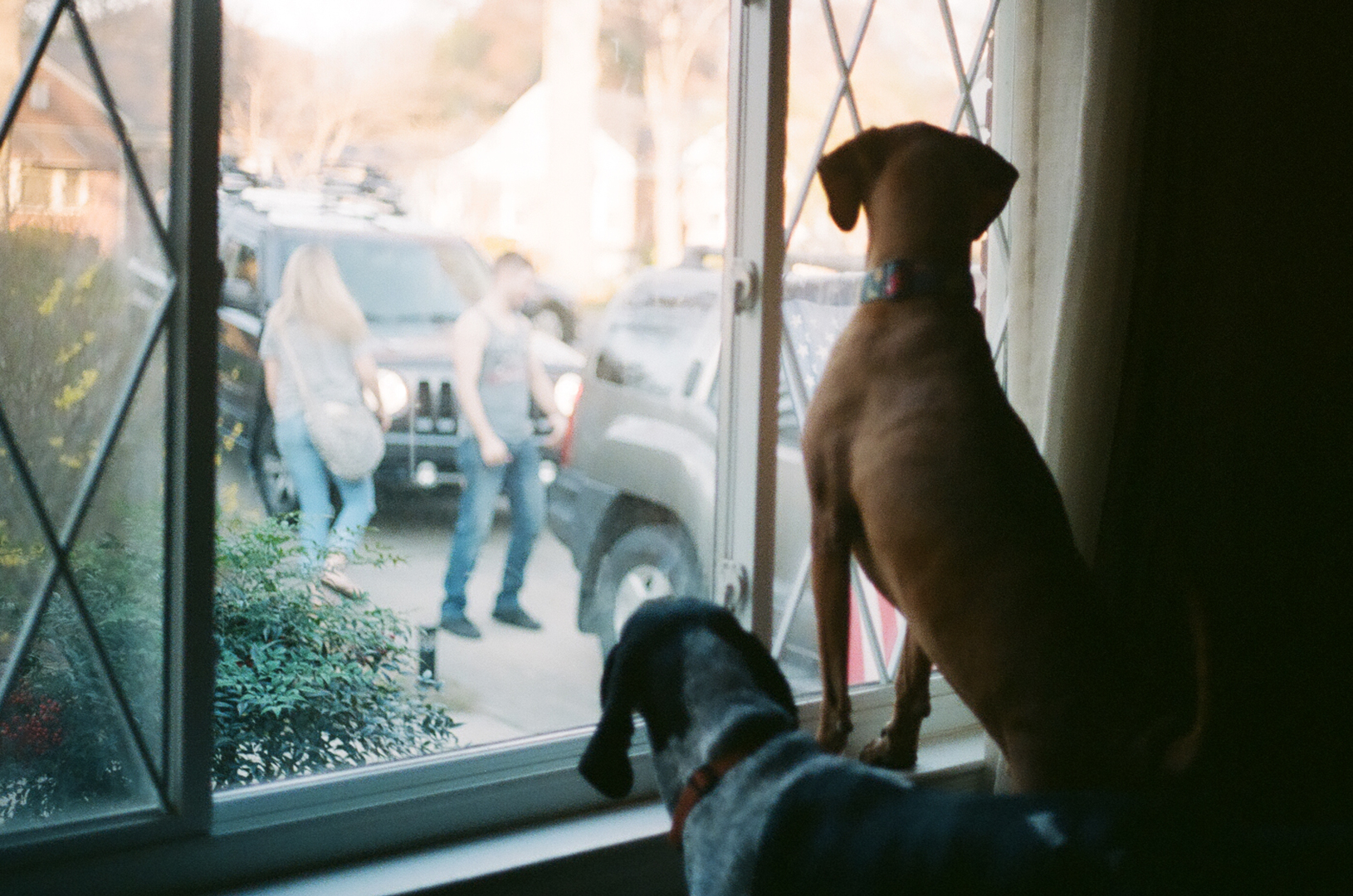 Charlotte-NC-Coonhounds-window