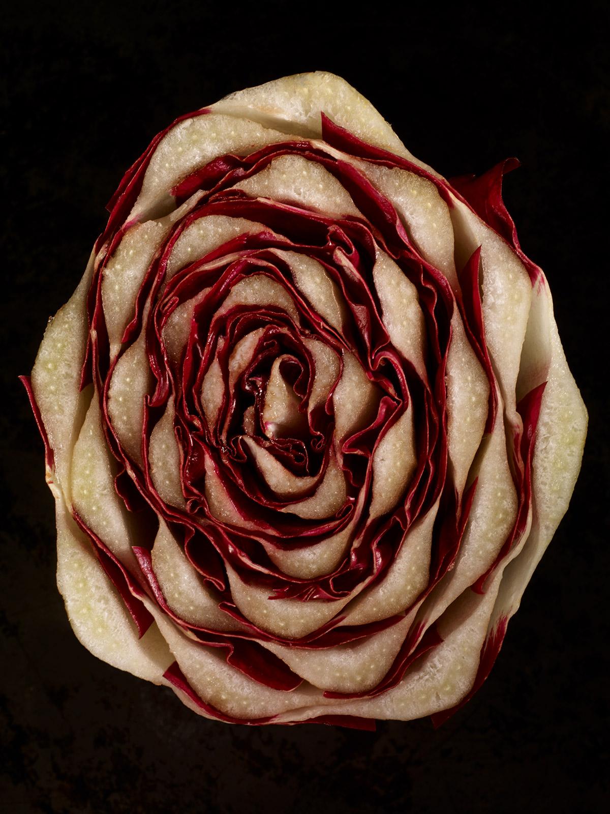 Radicchio rose