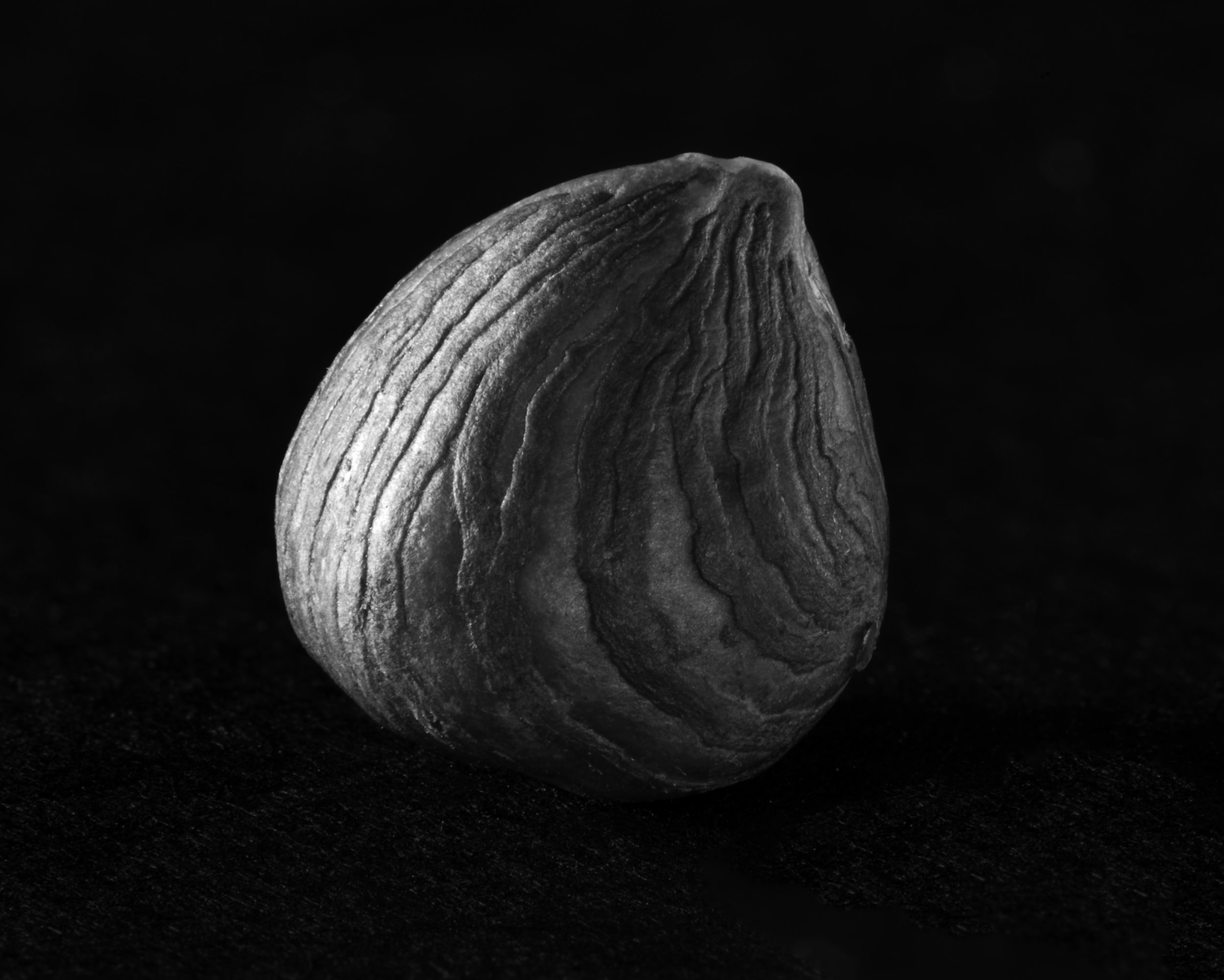 Hazelnut in macro