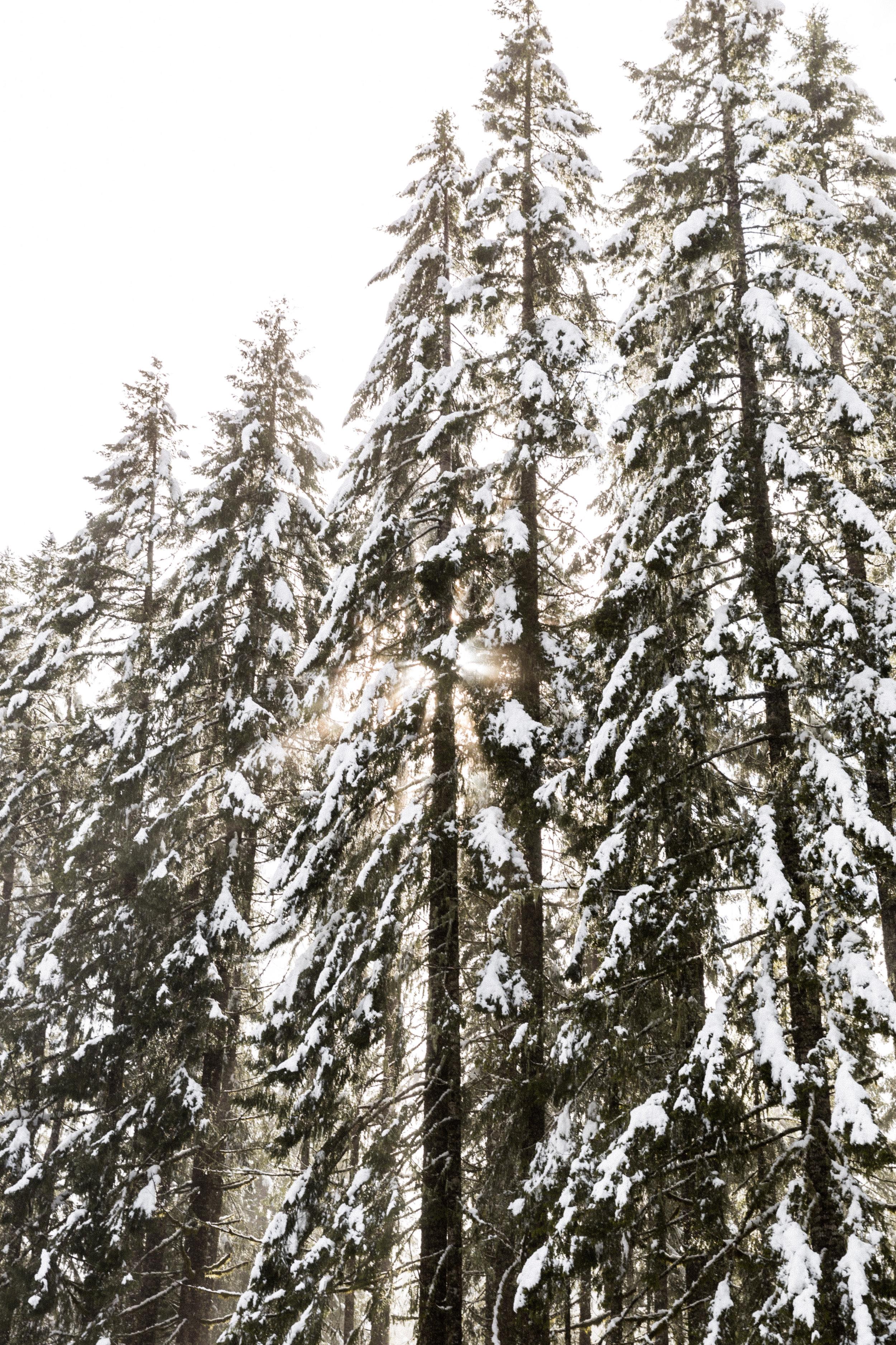 Oregon-3835.jpg