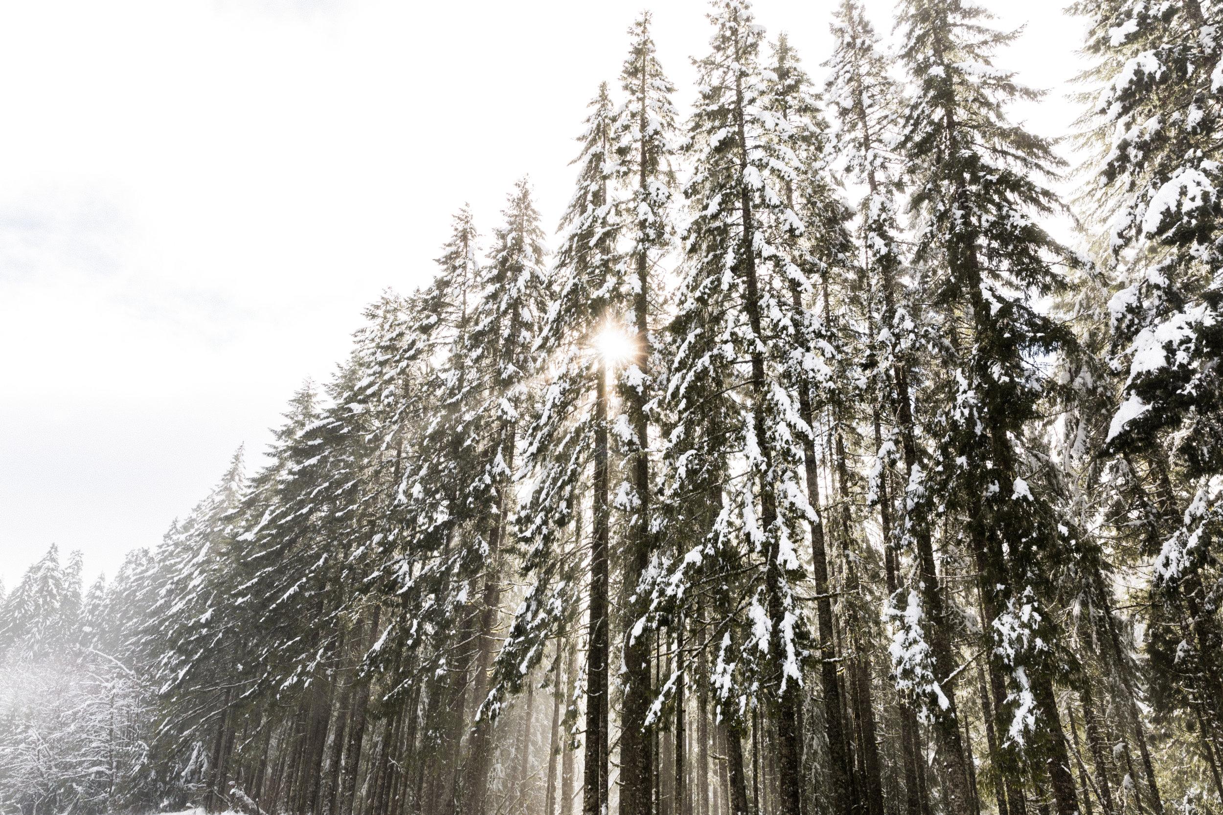 Oregon-3838.jpg