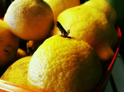 The lemons in the tart. Photo credit: Jacqueline Andresen