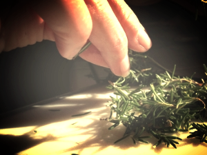 Rosemary picked fresh from the garden
