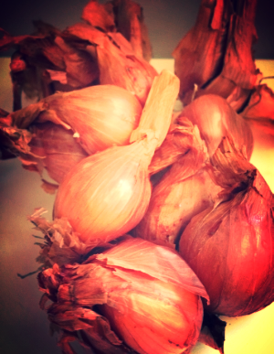 SHALLOTS FROM  oUT OF THE bOX cOLLECTIVE