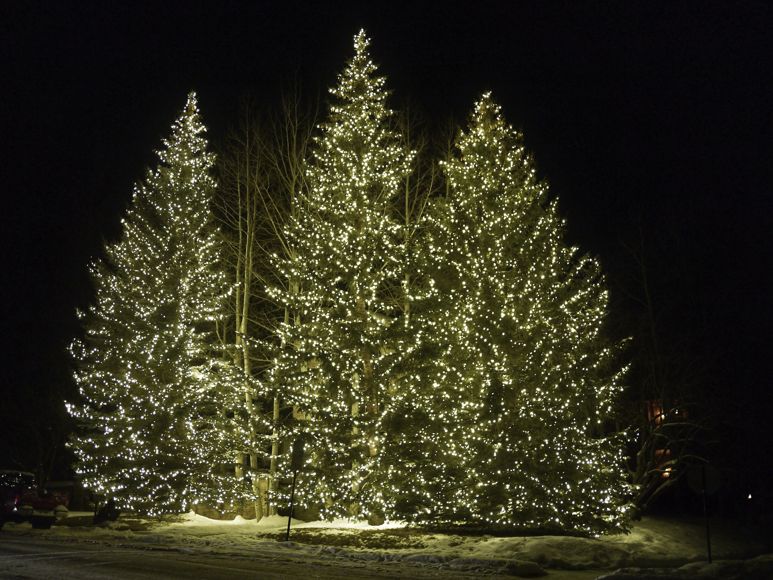 Spruce Tree Christmas Lights Aspen