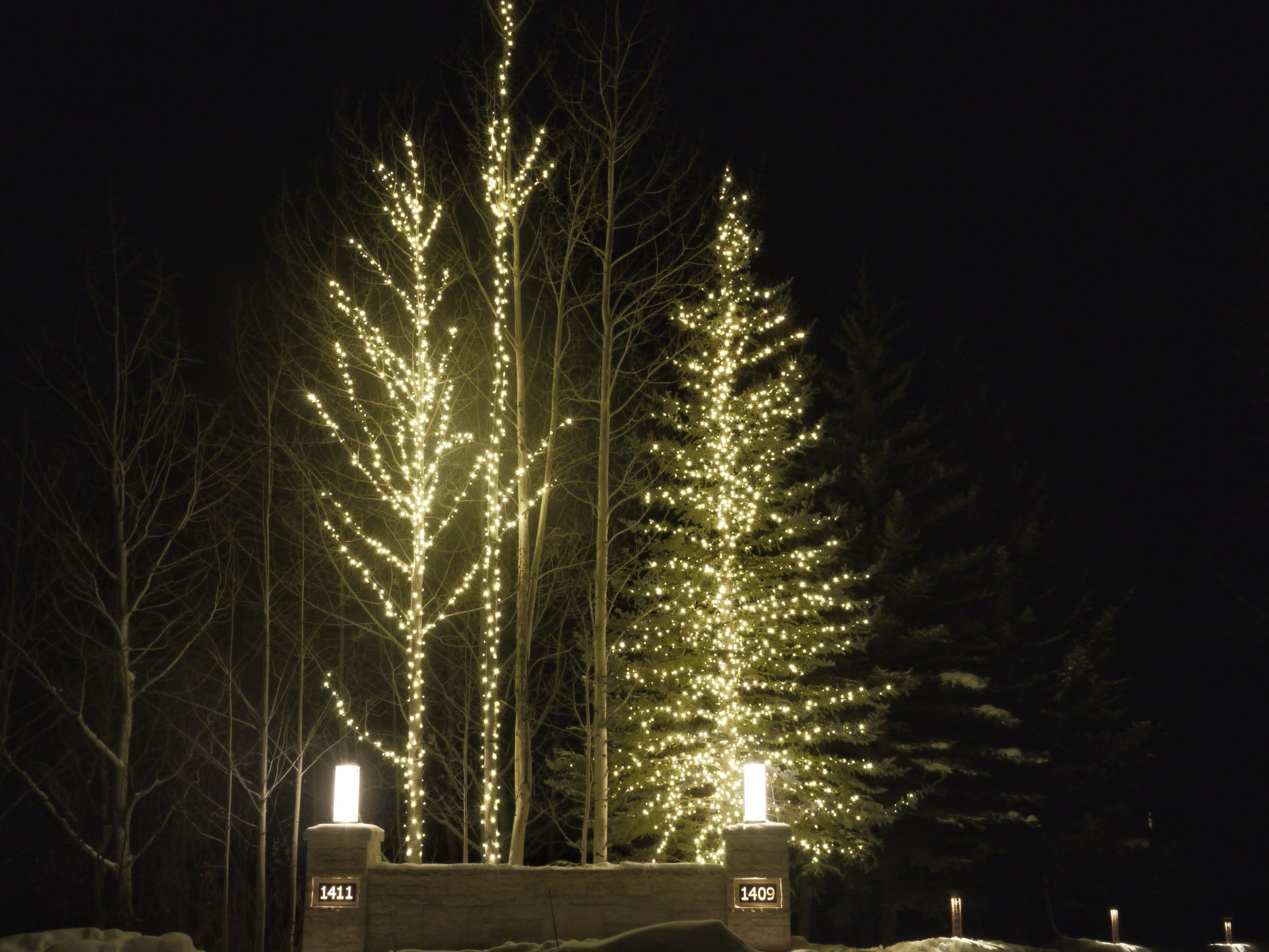 Aspen Residential Large Tree Holiday Lights