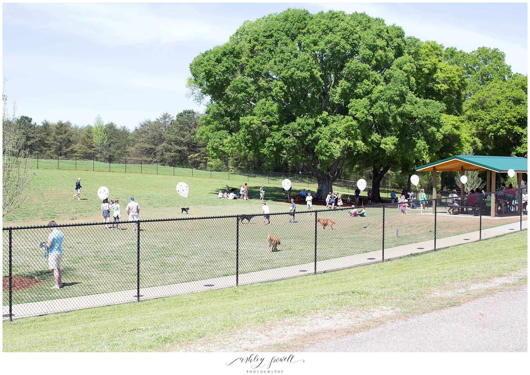 Bark in the Park in Tuscaloosa, AL | Ashley Powell Photography