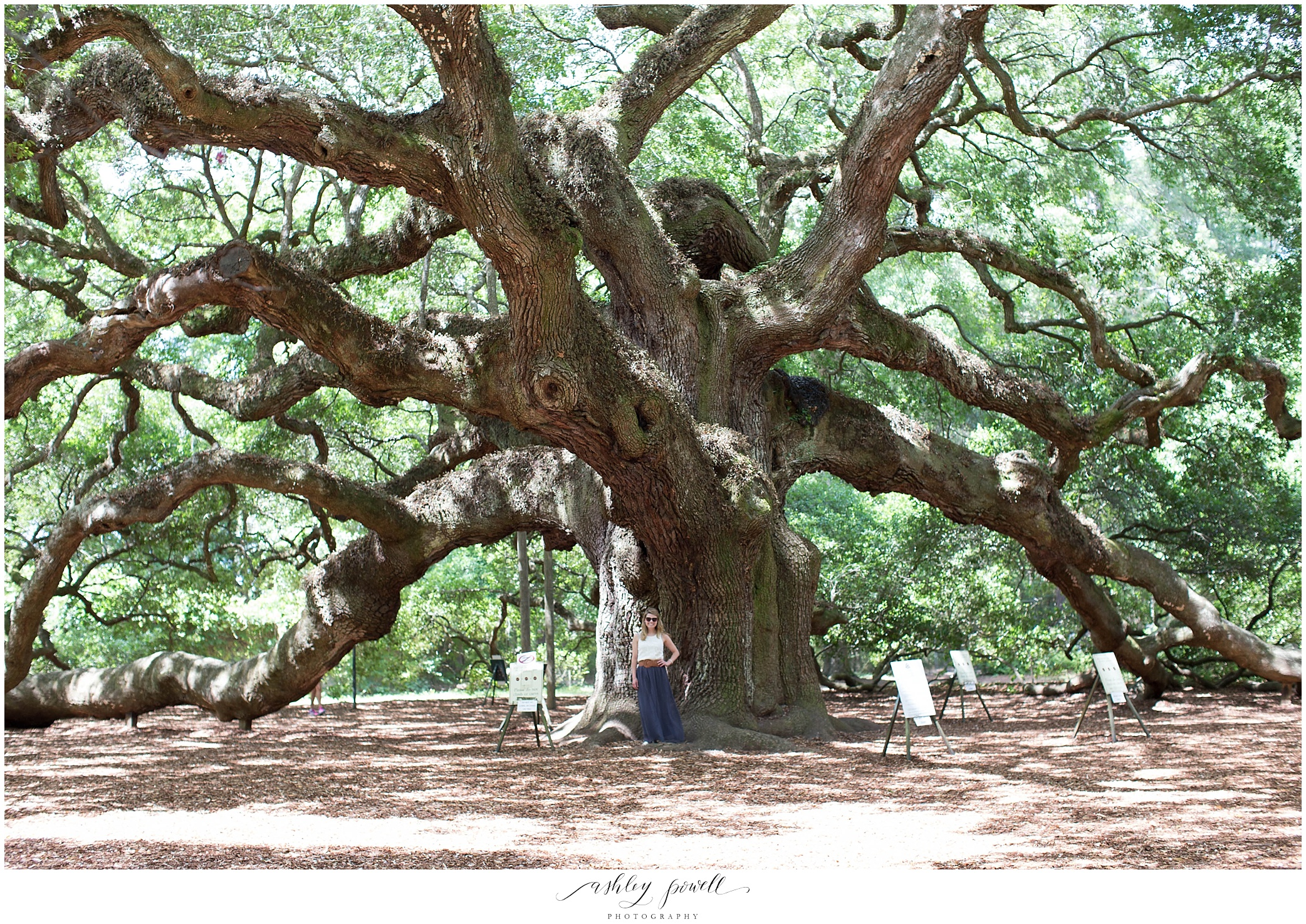 Angel Oak | Charleston, SC | Ashley Powell Photography