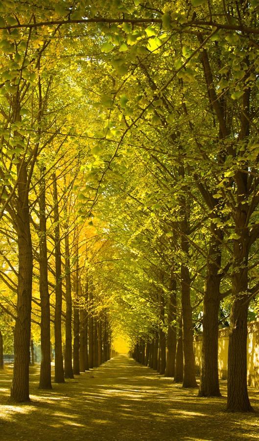 fall in beijing