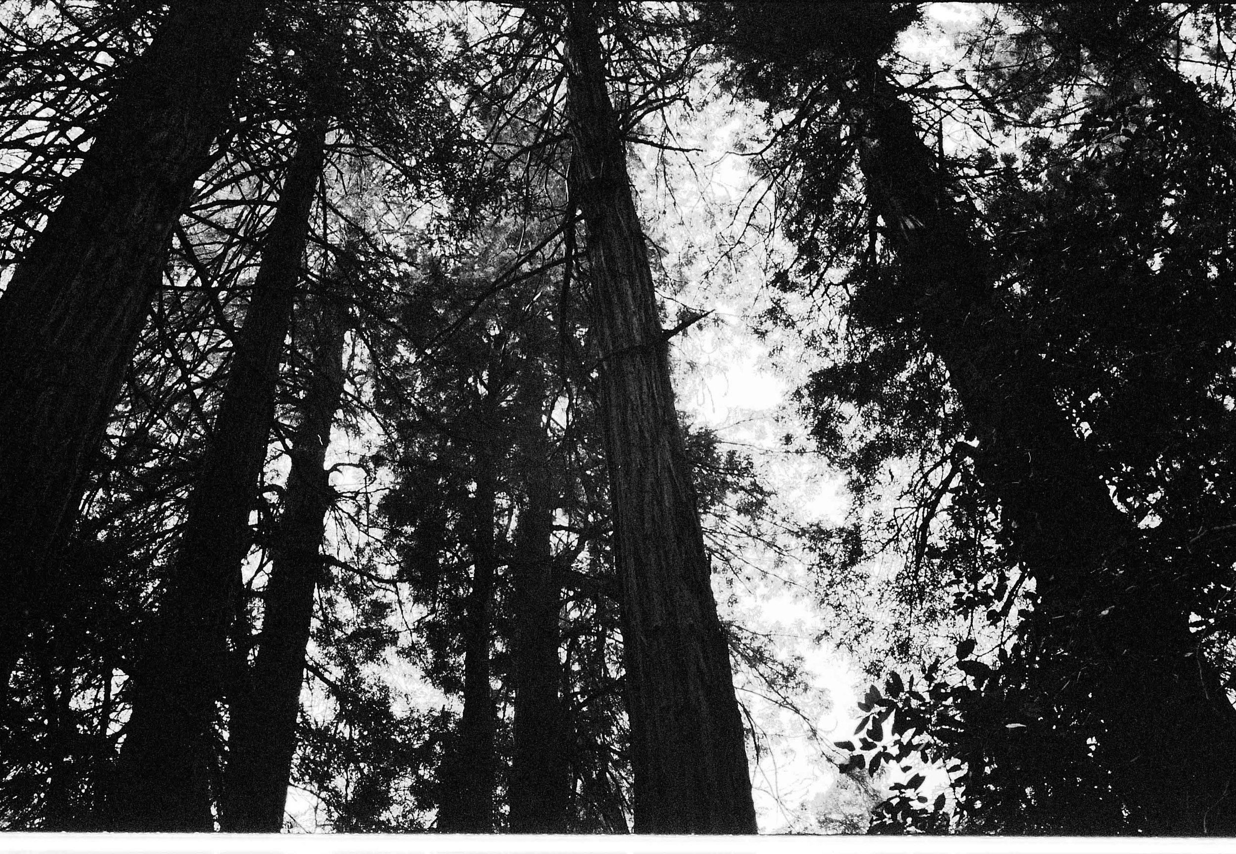 muir woods.jpg