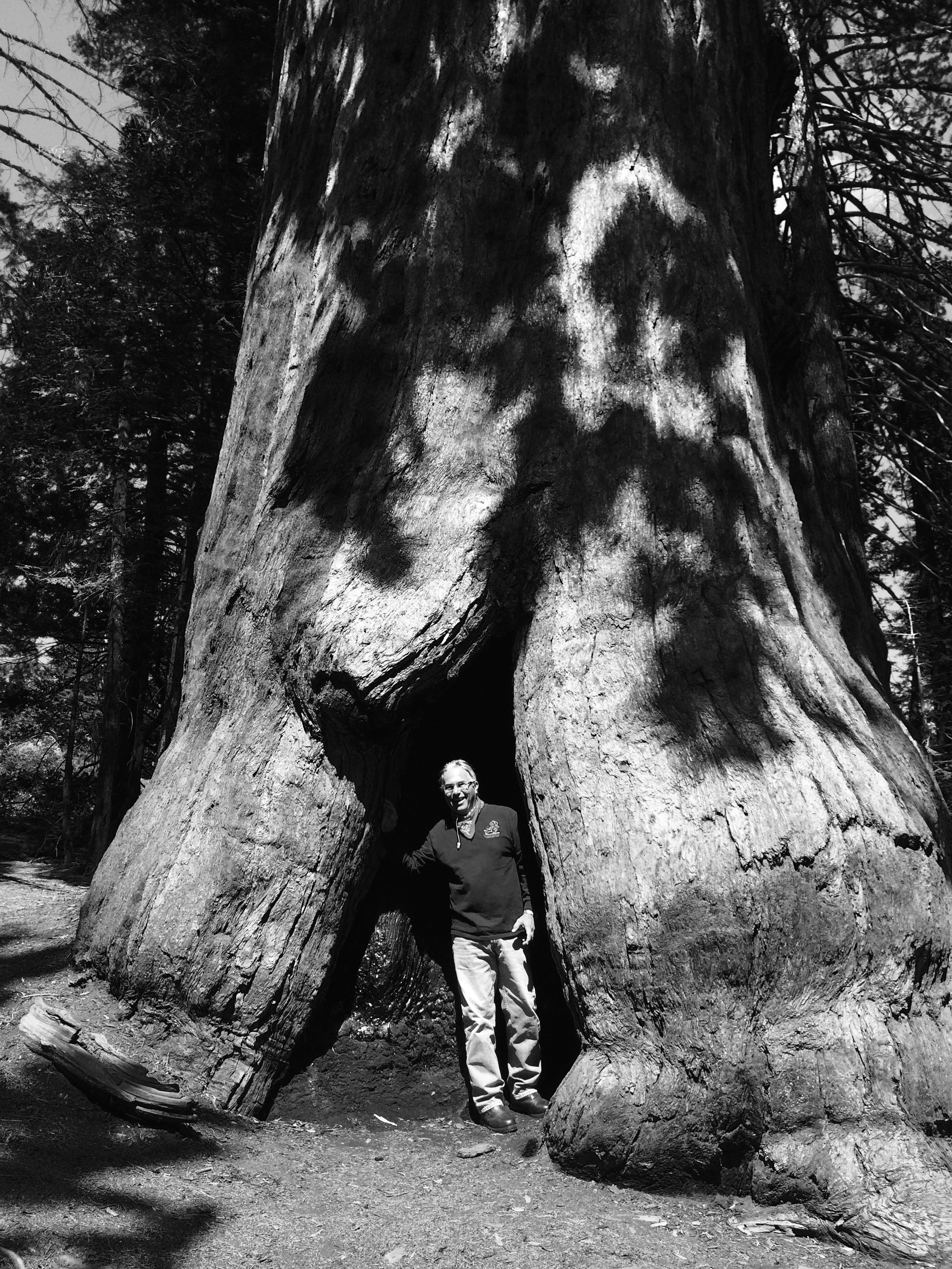 Here I am checking out one of the sequoias.