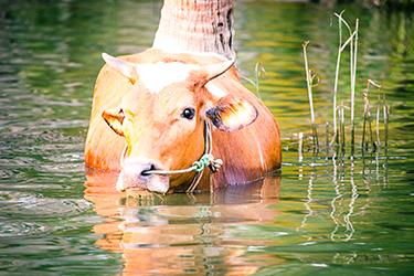 India2013_TRV_BackwaterTour_371.jpg