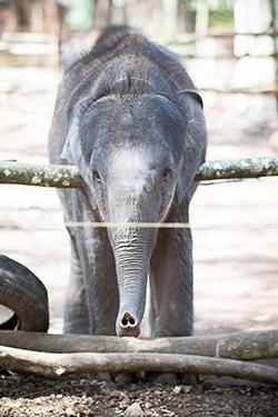 India2013_TRV_Elephant082.jpg