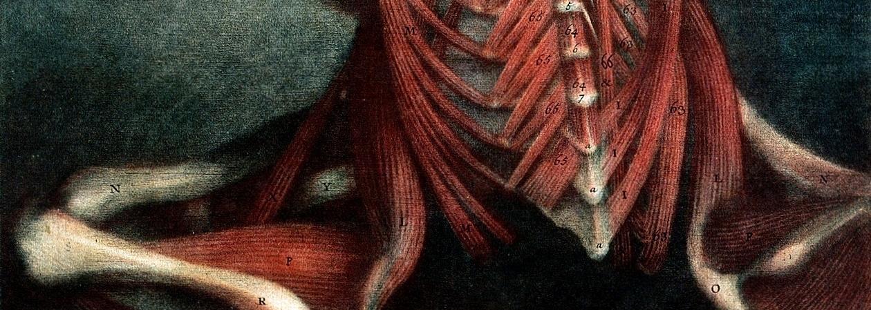 MusclesBanner.JPG