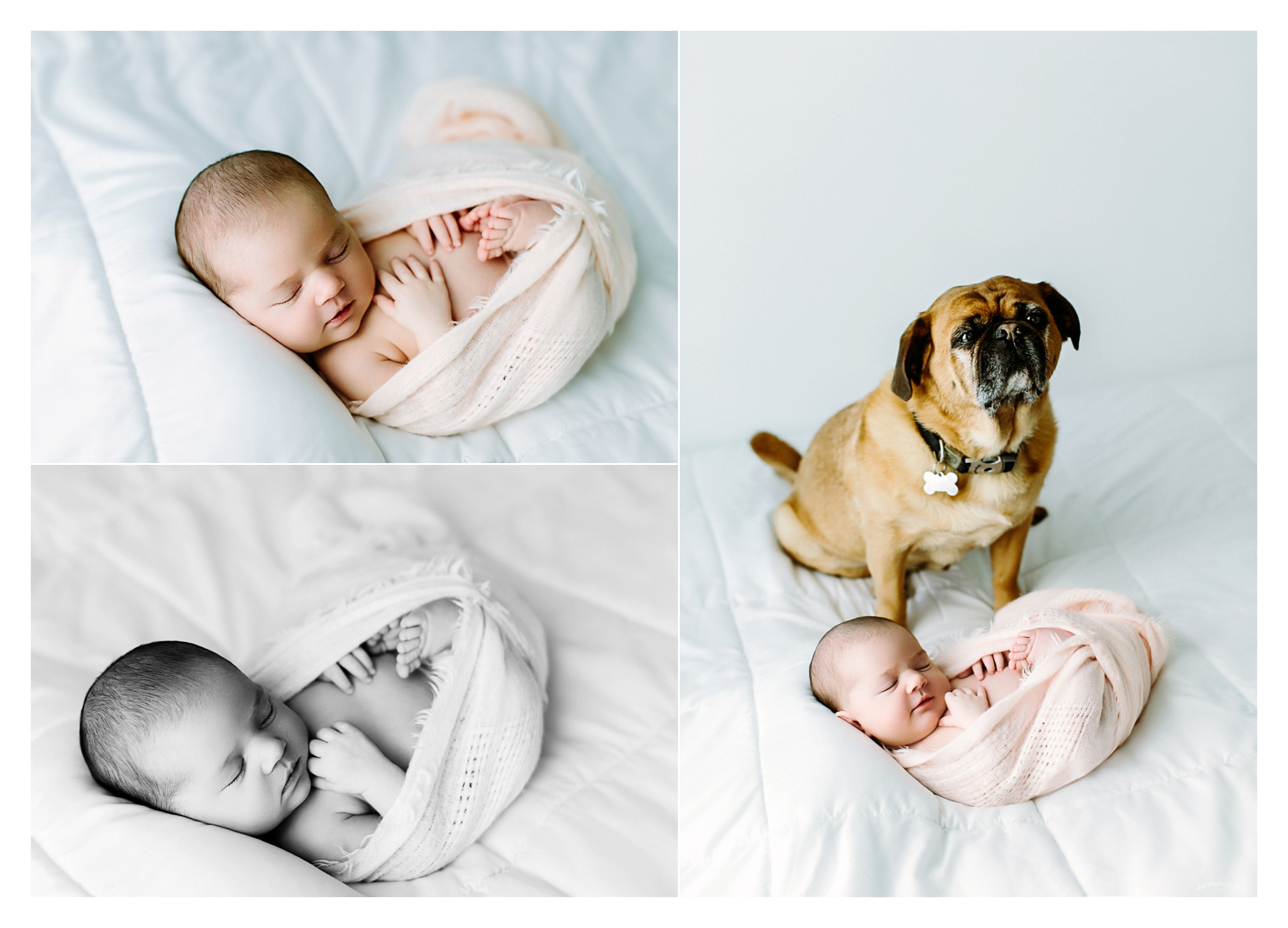 Newborn Photography Portland Oregon Sommessa_1642.jpg