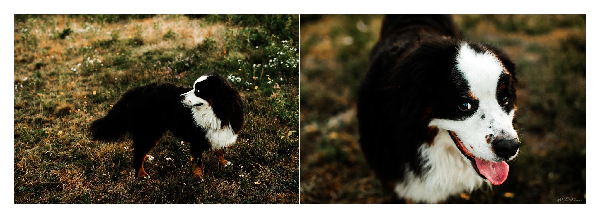 Portland Oregon Family Photographer Sommessa_2461.jpg