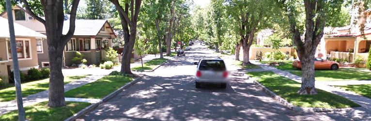 Great Tree Lined Street