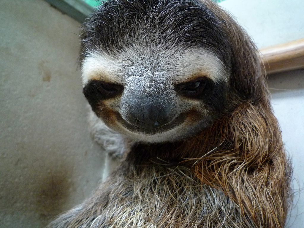 Sloth-Smiling-10.jpg