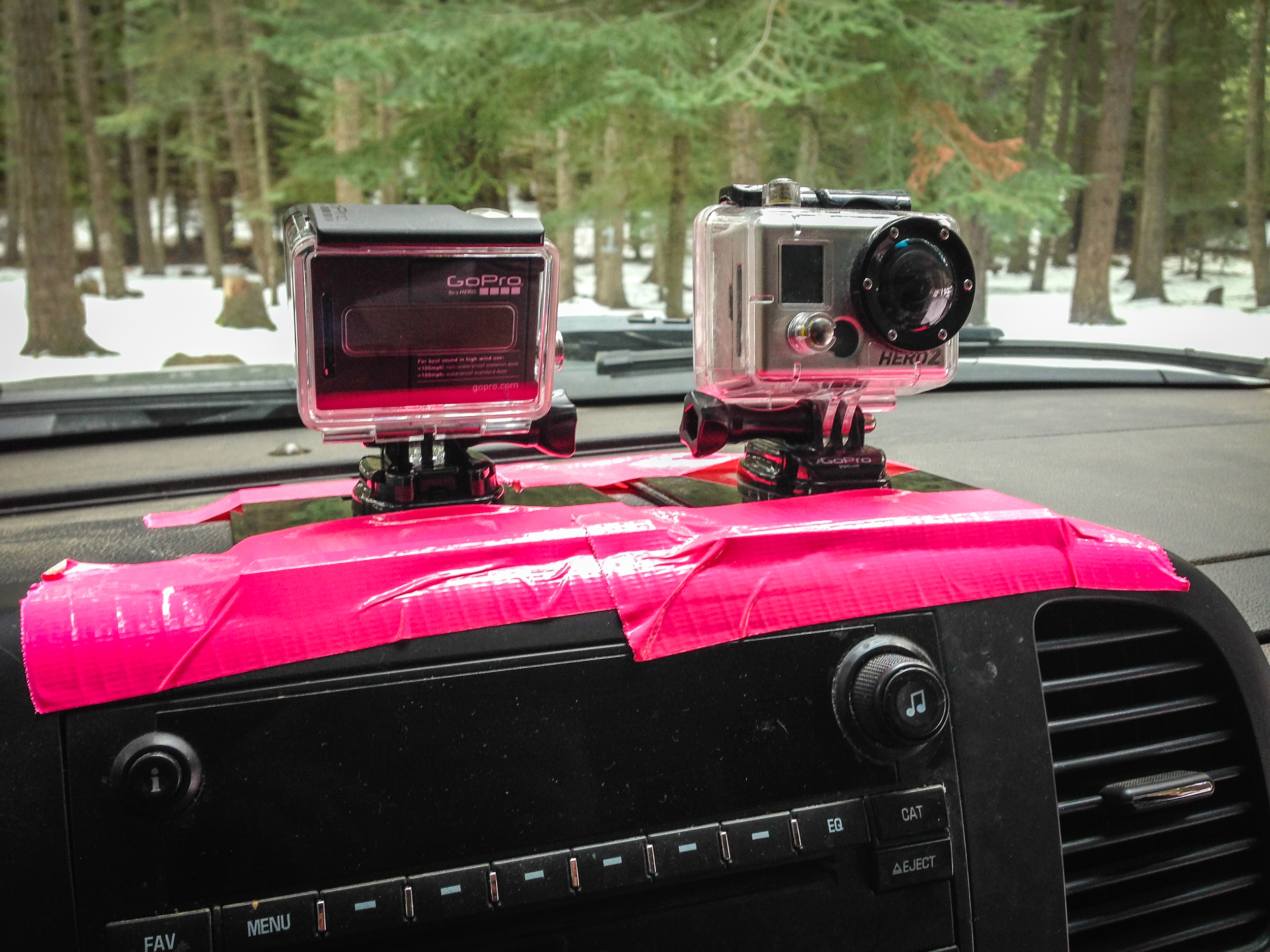 Did some time-lapsing with these guys. Gotta love the pink.