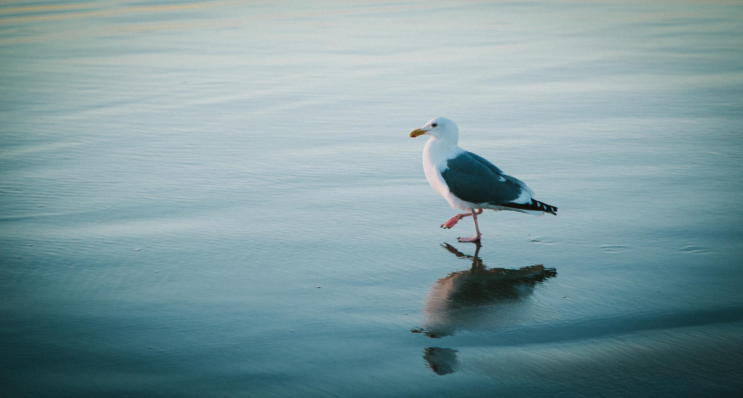 seagull web.jpg