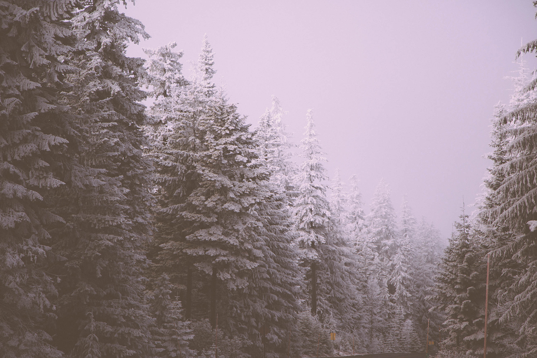 pink snow 1500.jpg