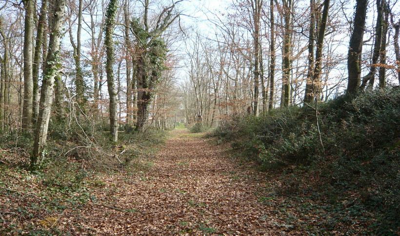 Pathway woods.jpg