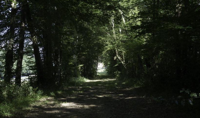 Woods II.jpg