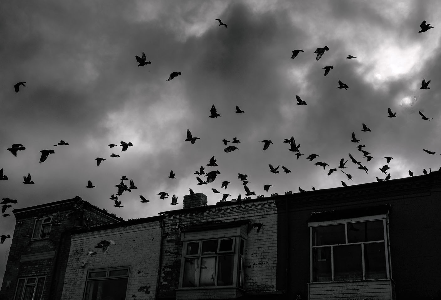 Swarm by Me & I Photography