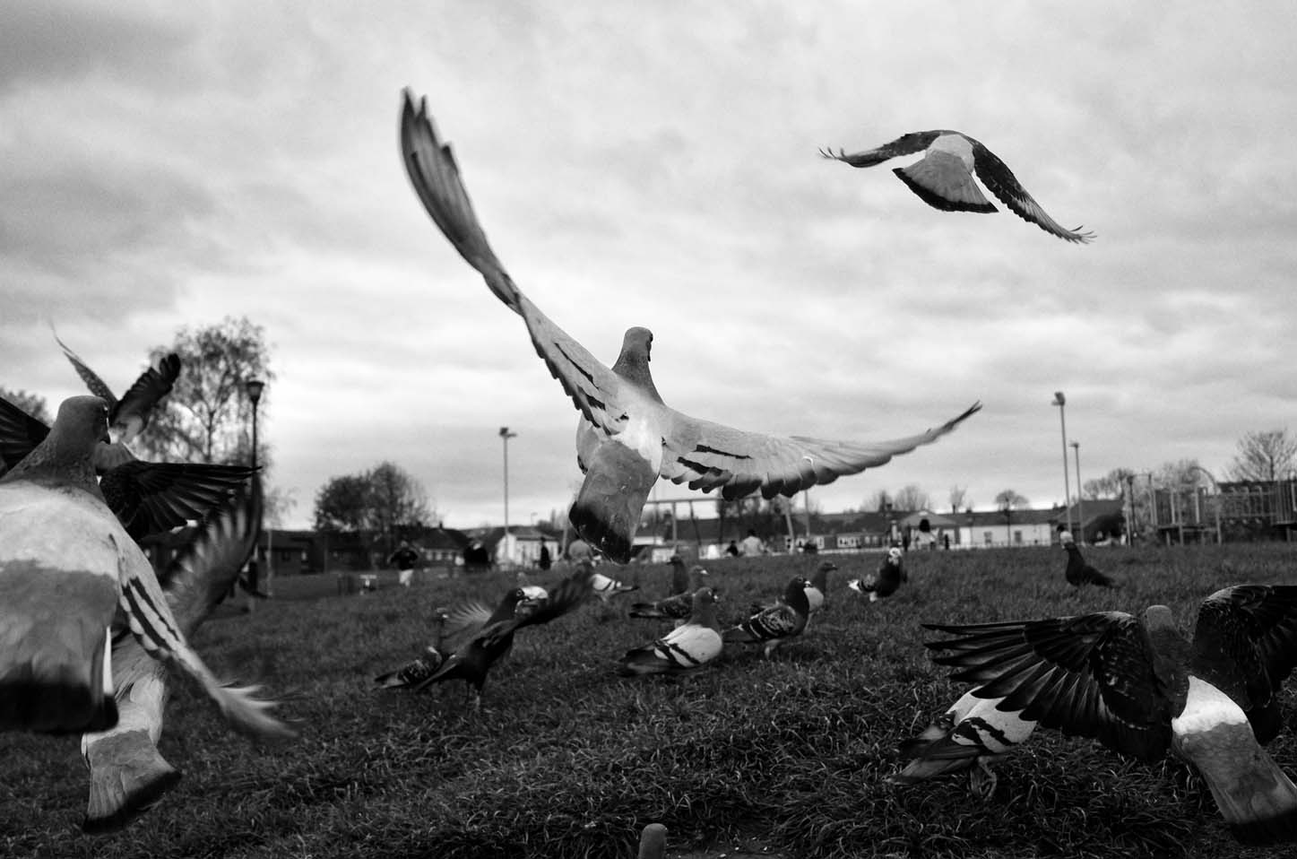 Pigeons in flight... by Me & I Photography