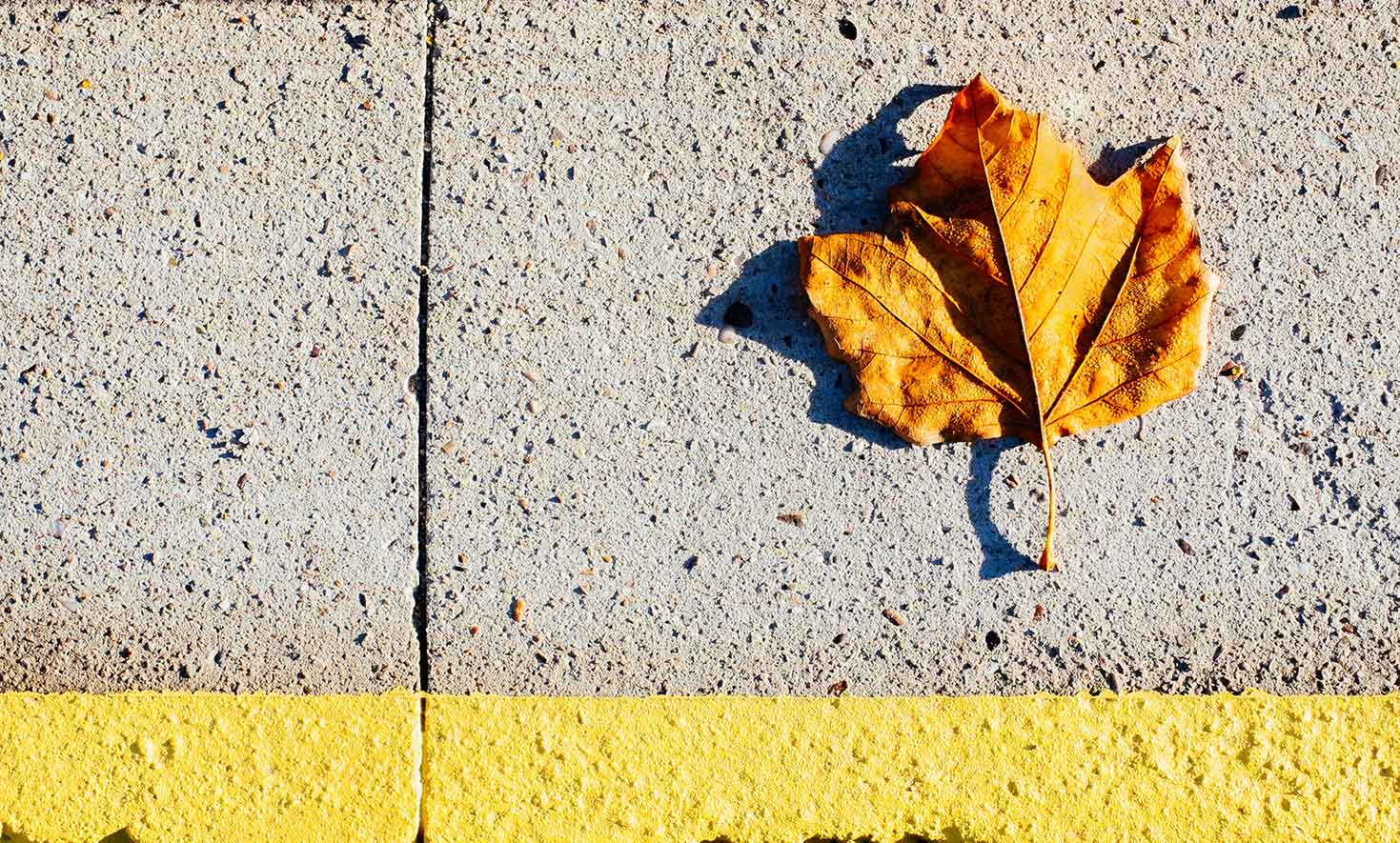 Leaf by Me & I Photography