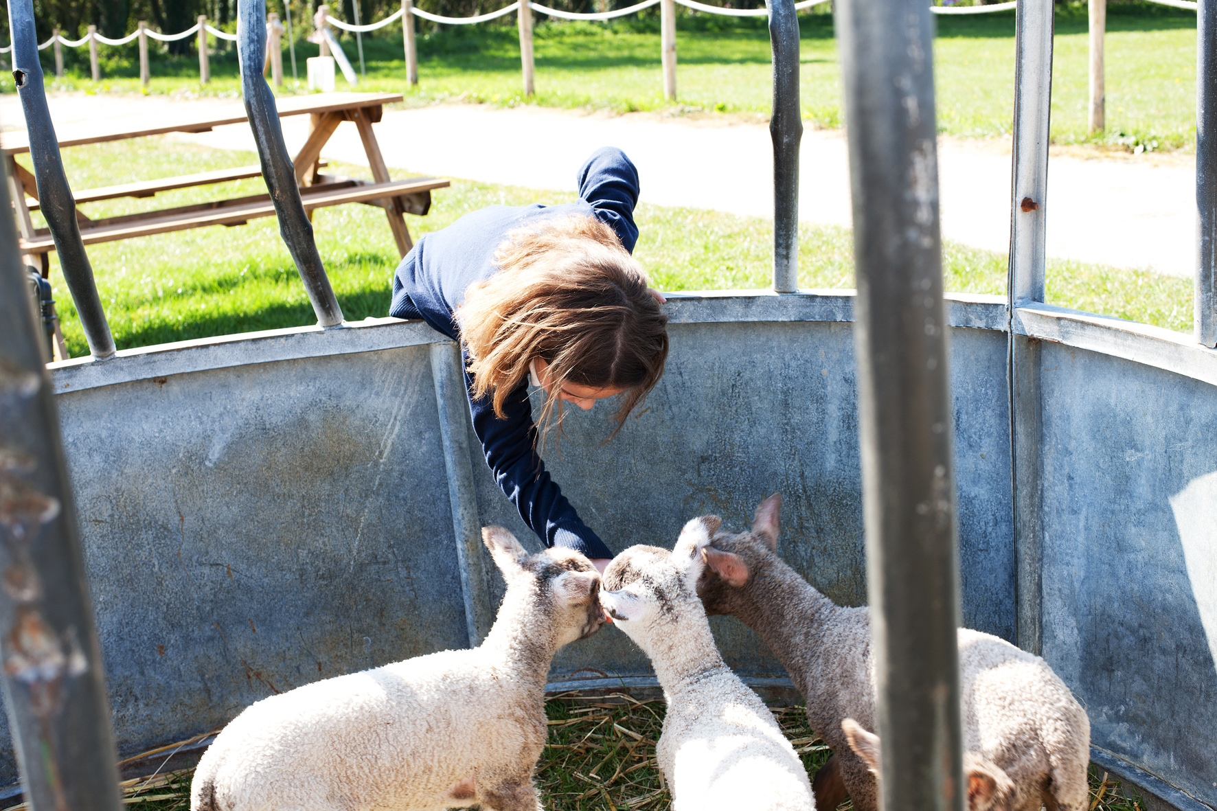 Make friends with our lambs