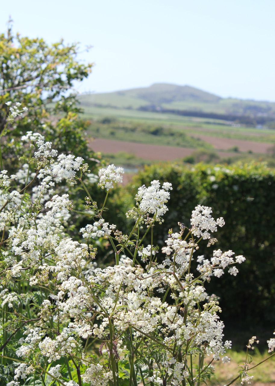 Tapnell-Farm-Blossom.jpg
